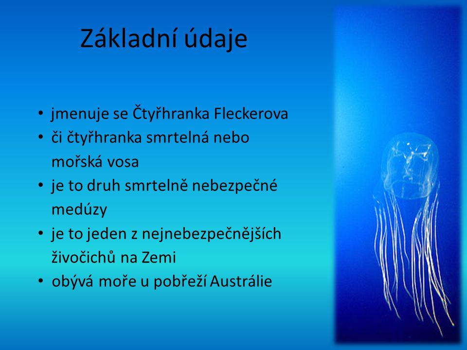 Základní údaje jmenuje se Čtyřhranka Fleckerova či čtyřhranka smrtelná nebo mořská vosa je to druh smrtelně nebezpečné medúzy je to jeden z nejnebezpečnějších živočichů na Zemi obývá moře u pobřeží Austrálie