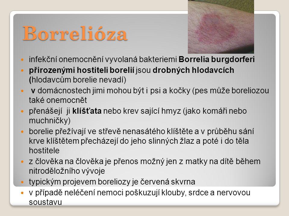 Borrelióza infekční onemocnění vyvolaná bakteriemi Borrelia burgdorferi přirozenými hostiteli borelií jsou drobných hlodavcích (hlodavcům borelie neva