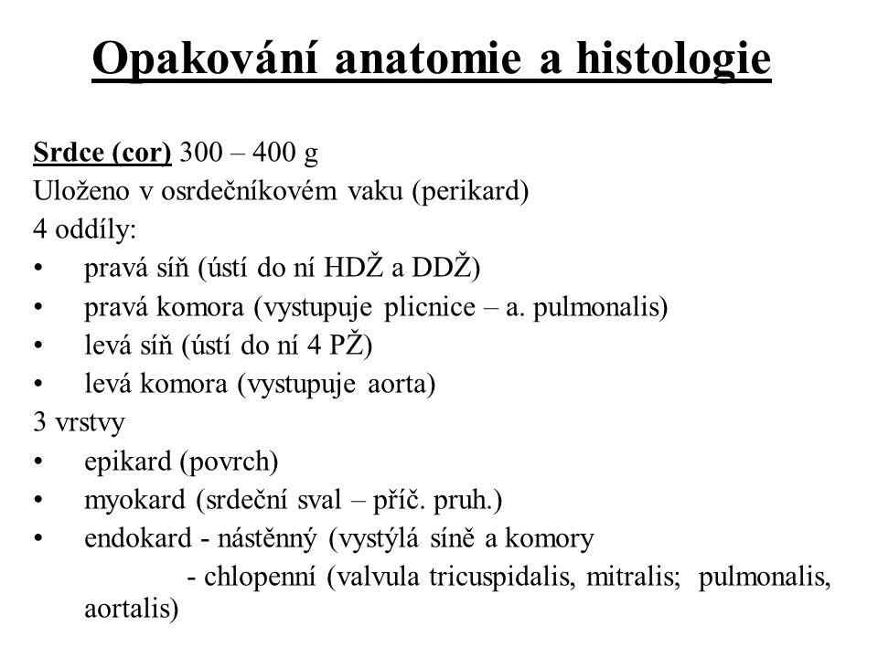Opakování anatomie a histologie Srdce (cor) 300 – 400 g Uloženo v osrdečníkovém vaku (perikard) 4 oddíly: pravá síň (ústí do ní HDŽ a DDŽ) pravá komor
