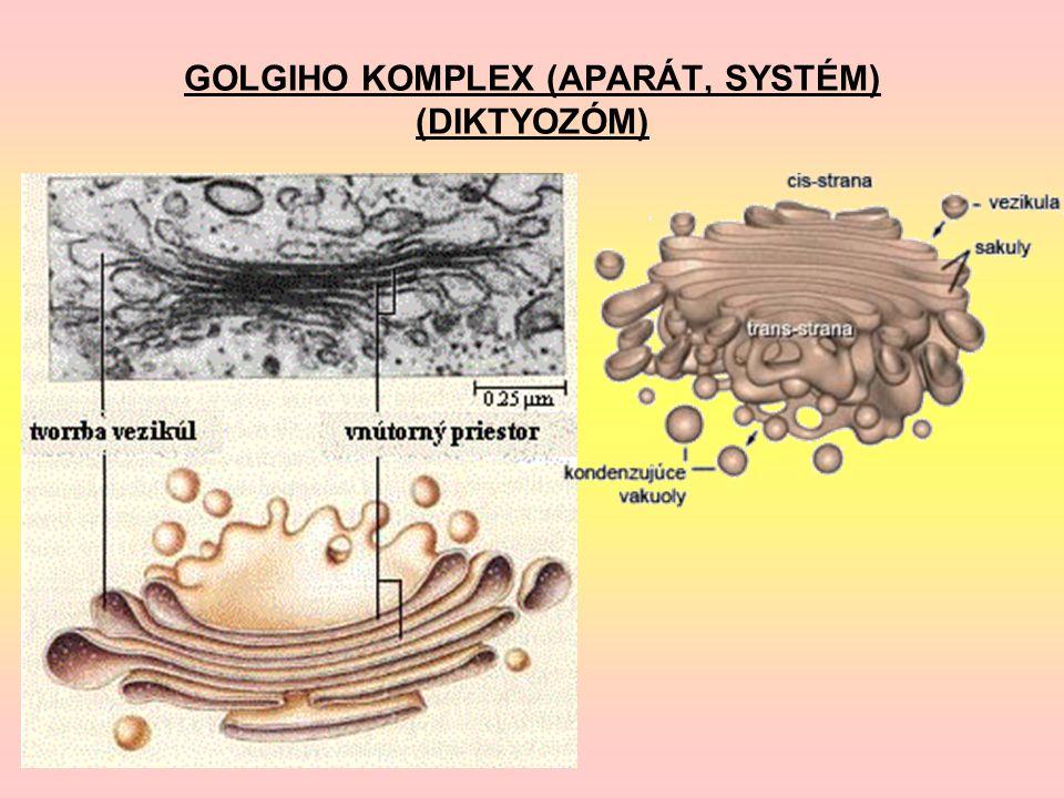 GOLGIHO KOMPLEX (APARÁT, SYSTÉM) (DIKTYOZÓM)