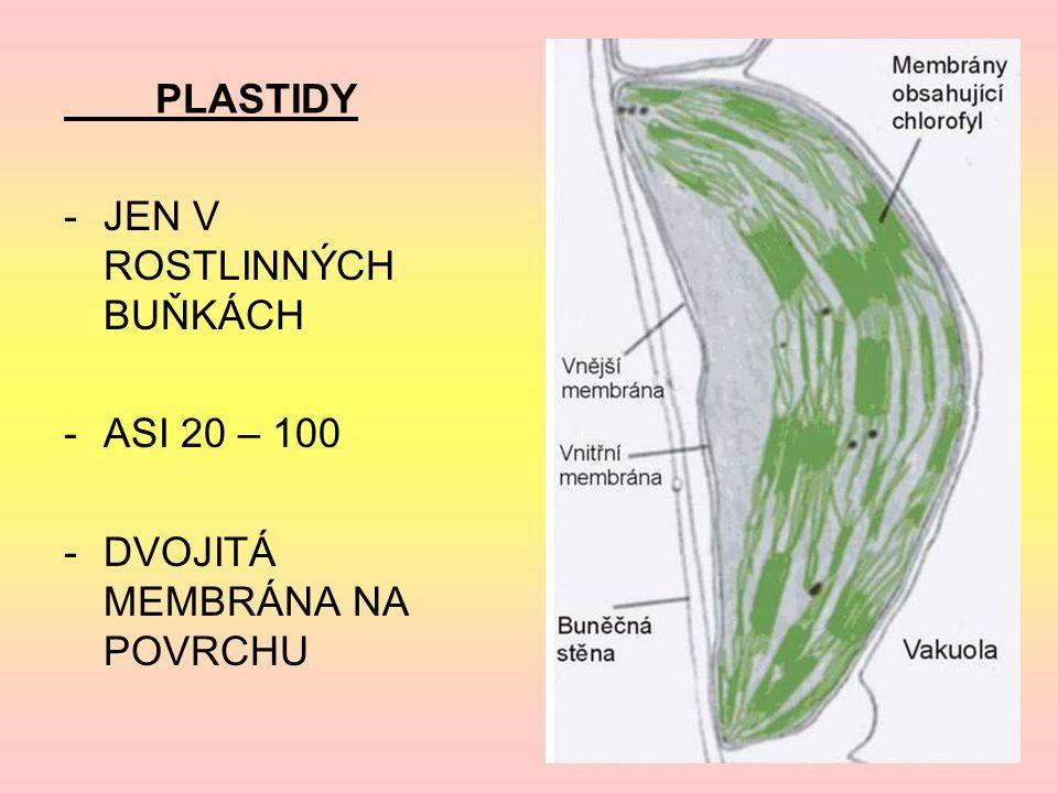 PLASTIDY -JEN V ROSTLINNÝCH BUŇKÁCH -ASI 20 – 100 -DVOJITÁ MEMBRÁNA NA POVRCHU