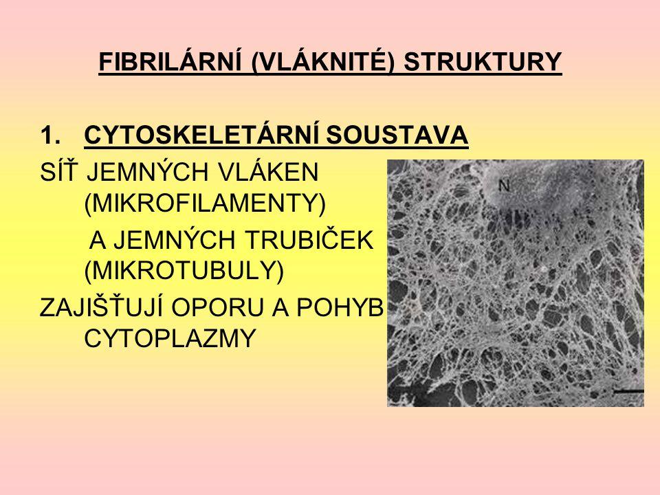 FIBRILÁRNÍ (VLÁKNITÉ) STRUKTURY 1.CYTOSKELETÁRNÍ SOUSTAVA SÍŤ JEMNÝCH VLÁKEN (MIKROFILAMENTY) A JEMNÝCH TRUBIČEK (MIKROTUBULY) ZAJIŠŤUJÍ OPORU A POHYB CYTOPLAZMY