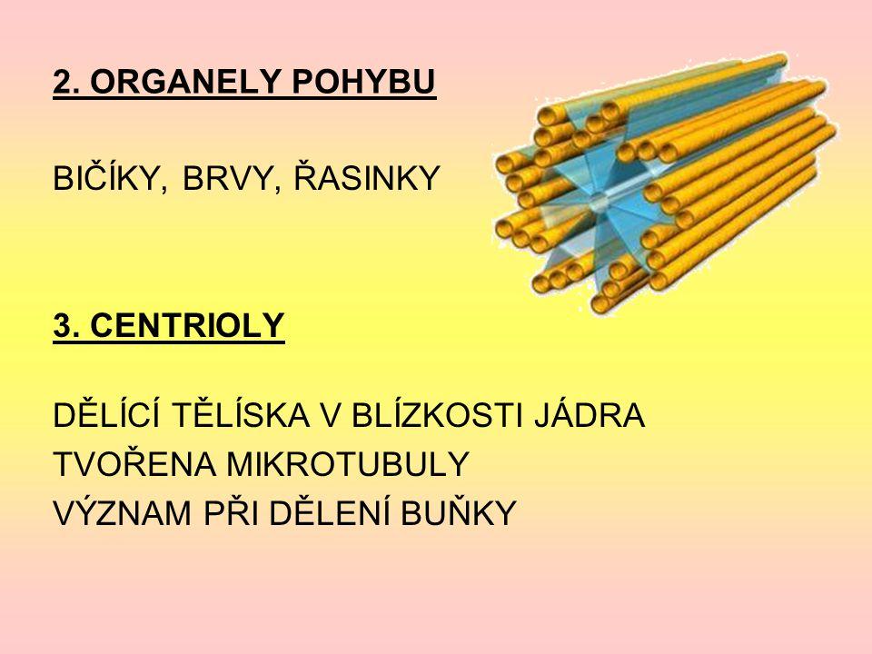 2.ORGANELY POHYBU BIČÍKY, BRVY, ŘASINKY 3.