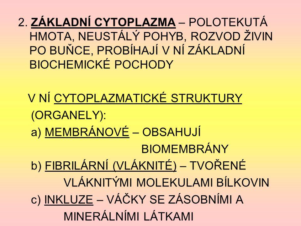 2. ZÁKLADNÍ CYTOPLAZMA – POLOTEKUTÁ HMOTA, NEUSTÁLÝ POHYB, ROZVOD ŽIVIN PO BUŇCE, PROBÍHAJÍ V NÍ ZÁKLADNÍ BIOCHEMICKÉ POCHODY V NÍ CYTOPLAZMATICKÉ STR