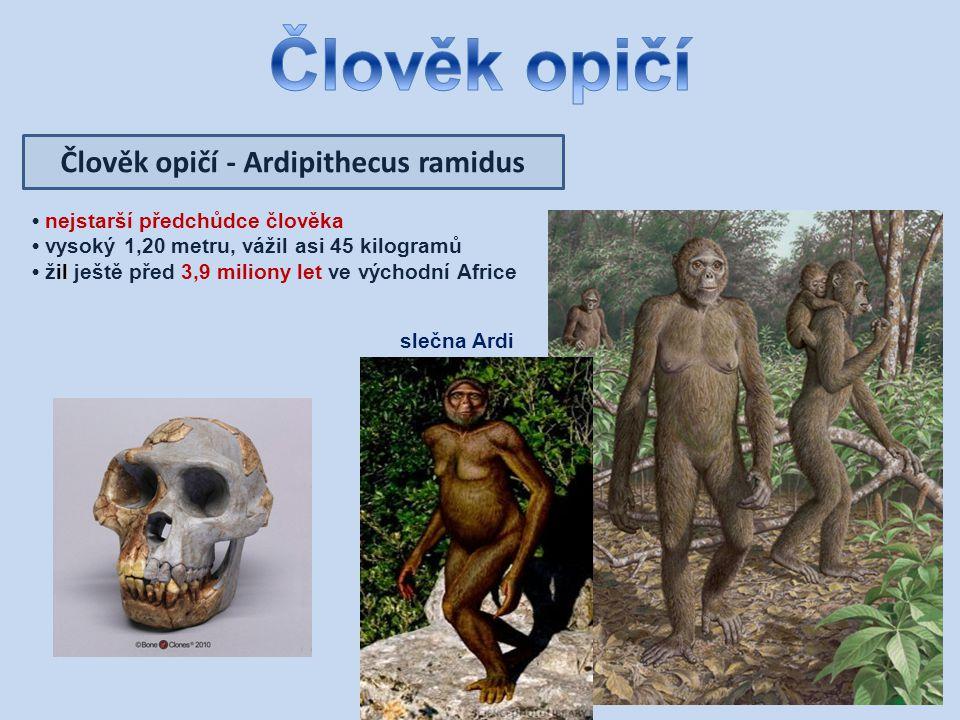 Člověk opičí - Ardipithecus ramidus nejstarší předchůdce člověka vysoký 1,20 metru, vážil asi 45 kilogramů žil ještě před 3,9 miliony let ve východní Africe slečna Ardi