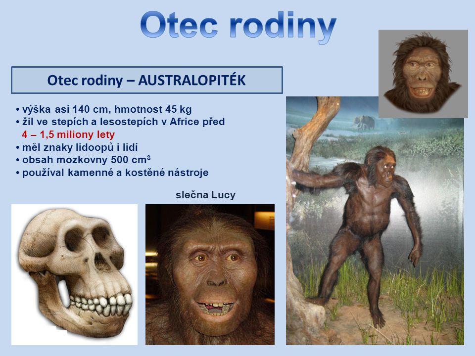 Otec rodiny – AUSTRALOPITÉK výška asi 140 cm, hmotnost 45 kg žil ve stepích a lesostepích v Africe před 4 – 1,5 miliony lety měl znaky lidoopů i lidí obsah mozkovny 500 cm 3 používal kamenné a kostěné nástroje slečna Lucy