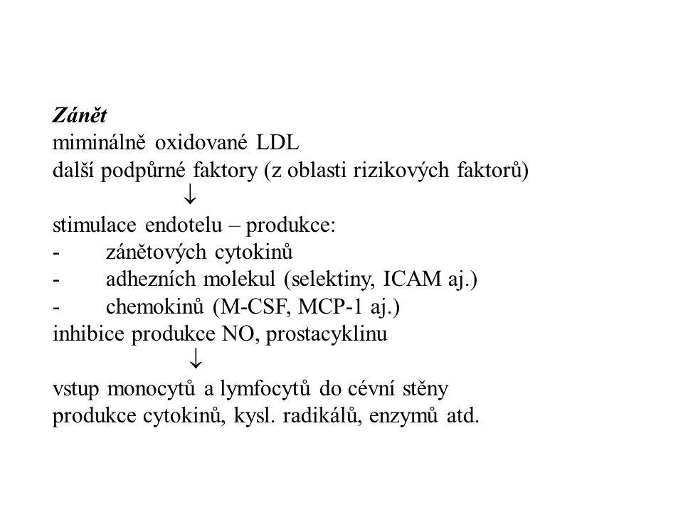 Zánět miminálně oxidované LDL další podpůrné faktory (z oblasti rizikových faktorů)  stimulace endotelu – produkce: - zánětových cytokinů - adhezních