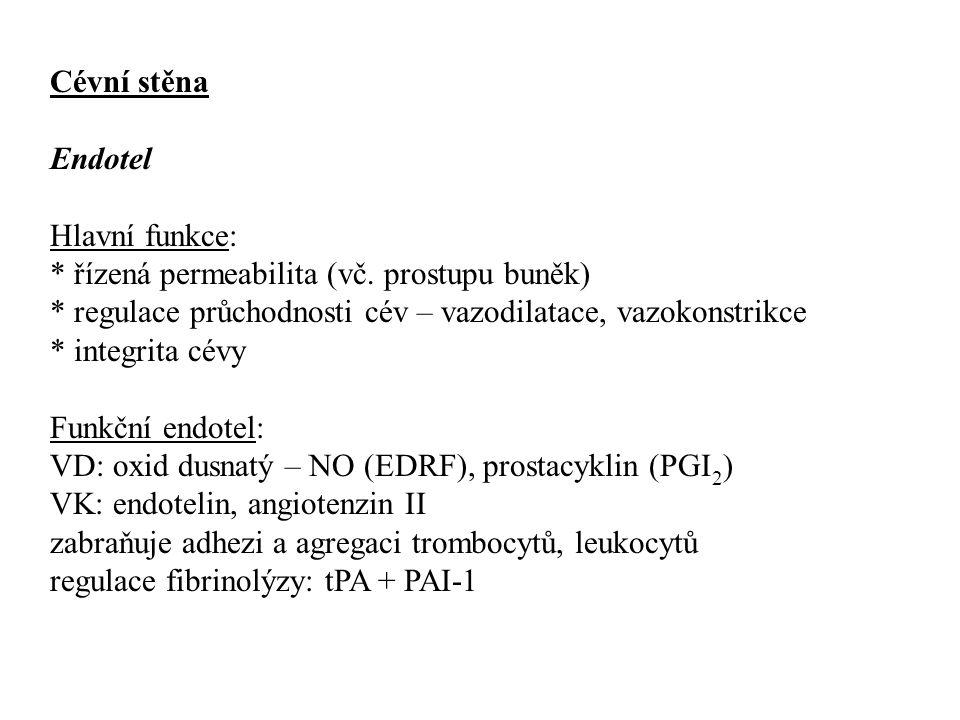 Cévní stěna Endotel Hlavní funkce: * řízená permeabilita (vč. prostupu buněk) * regulace průchodnosti cév – vazodilatace, vazokonstrikce * integrita c
