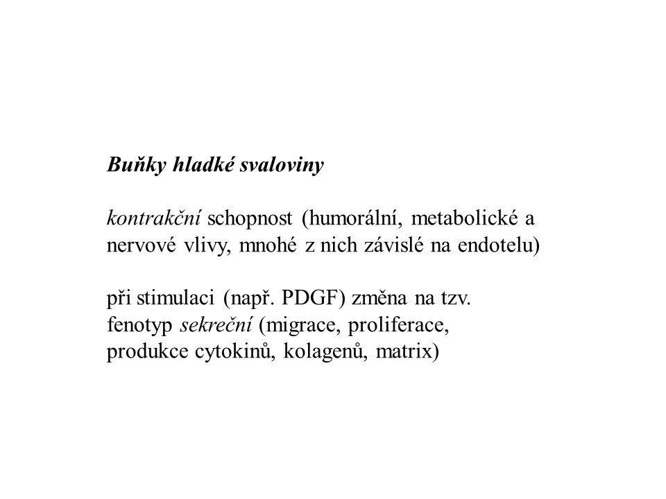 Buňky hladké svaloviny kontrakční schopnost (humorální, metabolické a nervové vlivy, mnohé z nich závislé na endotelu) při stimulaci (např. PDGF) změn