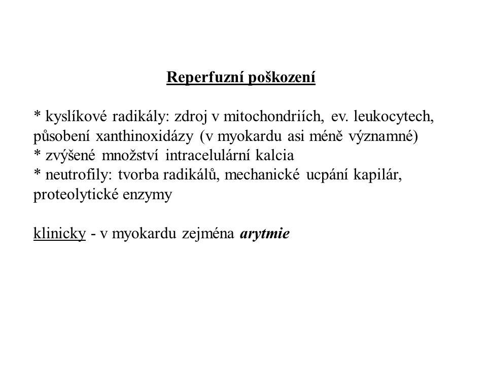 Reperfuzní poškození * kyslíkové radikály: zdroj v mitochondriích, ev. leukocytech, působení xanthinoxidázy (v myokardu asi méně významné) * zvýšené m
