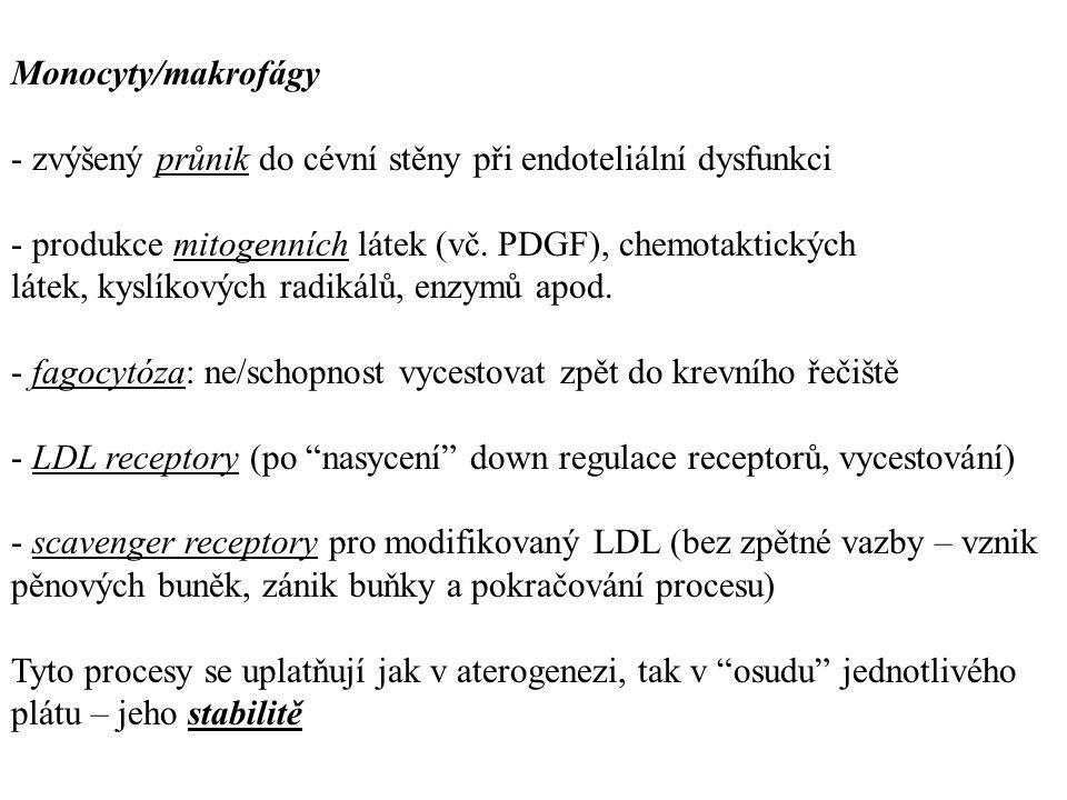 Monocyty/makrofágy - zvýšený průnik do cévní stěny při endoteliální dysfunkci - produkce mitogenních látek (vč. PDGF), chemotaktických látek, kyslíkov