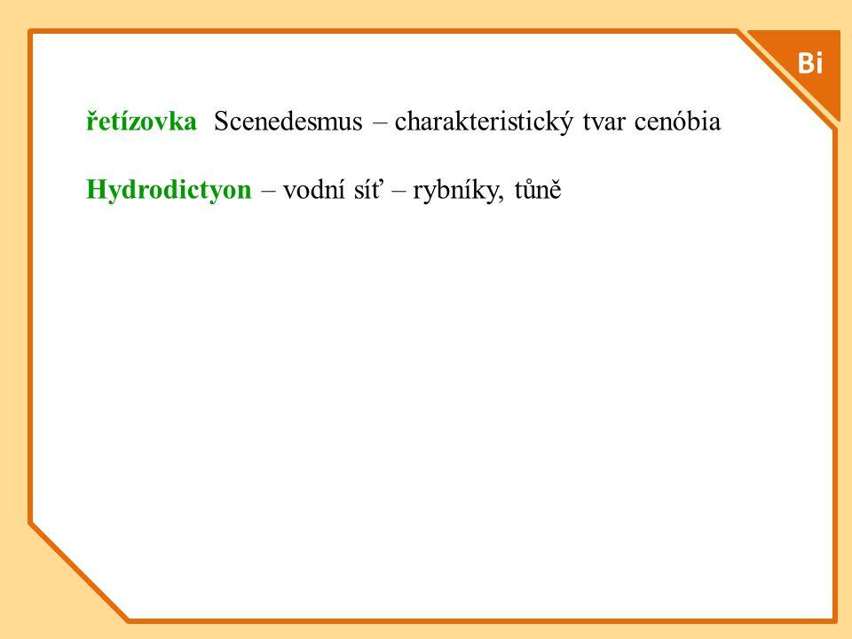 Bi řetízovka Scenedesmus – charakteristický tvar cenóbia Hydrodictyon – vodní síť – rybníky, tůně