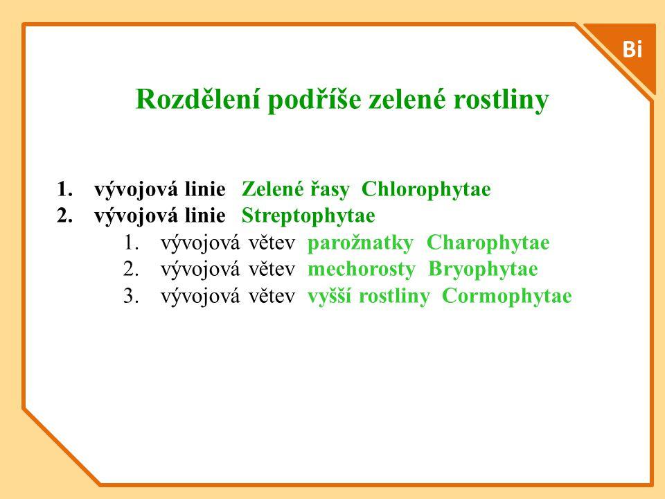 Bi Rozdělení podříše zelené rostliny 1.vývojová linie Zelené řasy Chlorophytae 2.vývojová linie Streptophytae 1.vývojová větev parožnatky Charophytae 2.vývojová větev mechorosty Bryophytae 3.vývojová větev vyšší rostliny Cormophytae