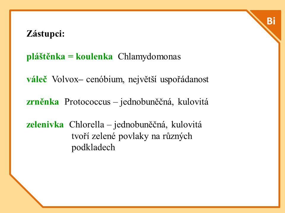 Bi Zástupci: pláštěnka = koulenka Chlamydomonas váleč Volvox– cenóbium, největší uspořádanost zrněnka Protococcus – jednobuněčná, kulovitá zelenivka Chlorella – jednobuněčná, kulovitá tvoří zelené povlaky na různých podkladech