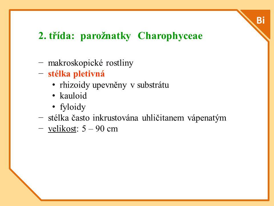Bi − makroskopické rostliny − stélka pletivná rhizoidy upevněny v substrátu kauloid fyloidy − stélka často inkrustována uhličitanem vápenatým − velikost: 5 – 90 cm 2.