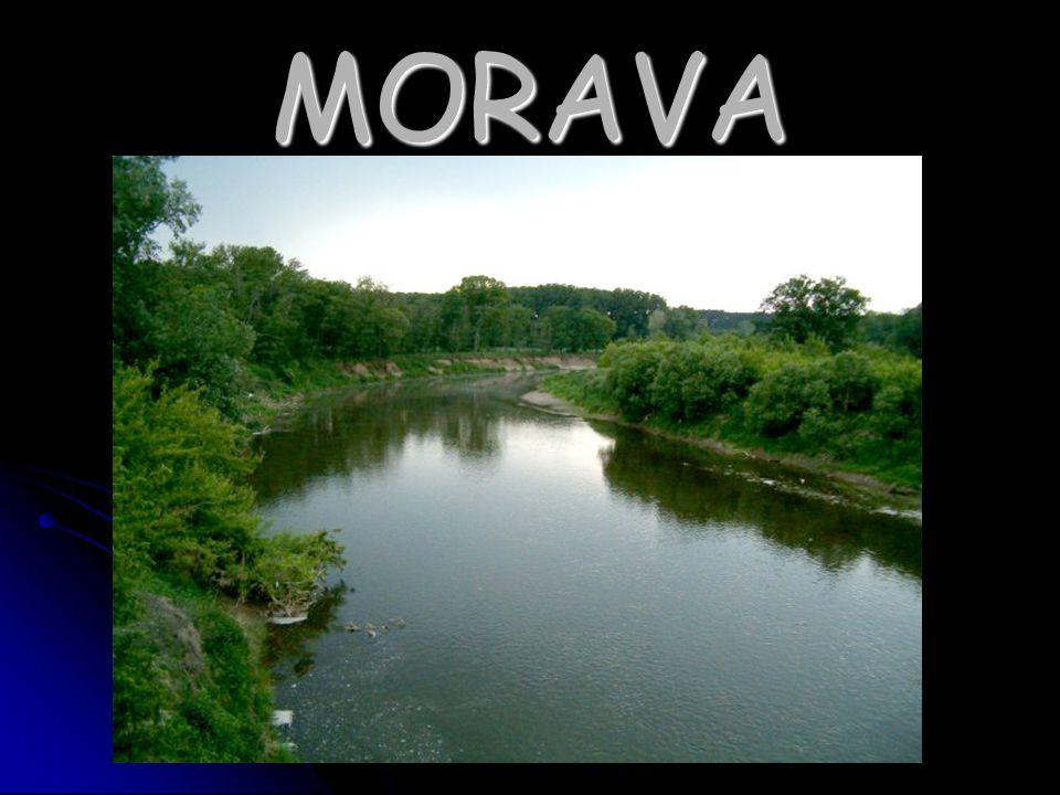 Morava je dlouhá 345km Morava je dlouhá 345km tvoří na dolním toku hranici mezi Českou republikou a Slovenskem a mezi Slovenskem a Rakouskem tvoří na dolním toku hranici mezi Českou republikou a Slovenskem a mezi Slovenskem a Rakouskem tato nejdůležitější moravská řeka, která protéká jejím územím od severu na jih, je levým přítokem Dunaje tato nejdůležitější moravská řeka, která protéká jejím územím od severu na jih, je levým přítokem Dunaje pramení pod vrcholem Králického Sněžníku v nadmořské výšce 1380m v upravené studánce pramení pod vrcholem Králického Sněžníku v nadmořské výšce 1380m v upravené studánce na území Moravy protéká například Litovlí, Olomoucí, Kroměříží nebo Uherským hradištěm na území Moravy protéká například Litovlí, Olomoucí, Kroměříží nebo Uherským hradištěm využívá se k zavlažování a zisku vodní energie využívá se k zavlažování a zisku vodní energie