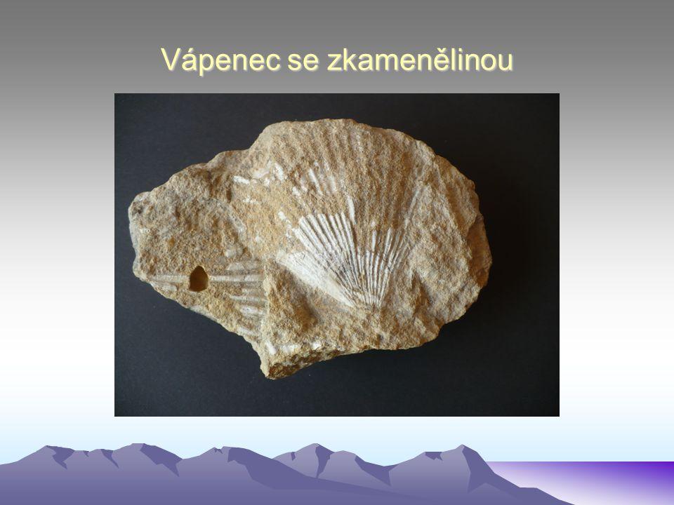 Vápenec se zkamenělinou