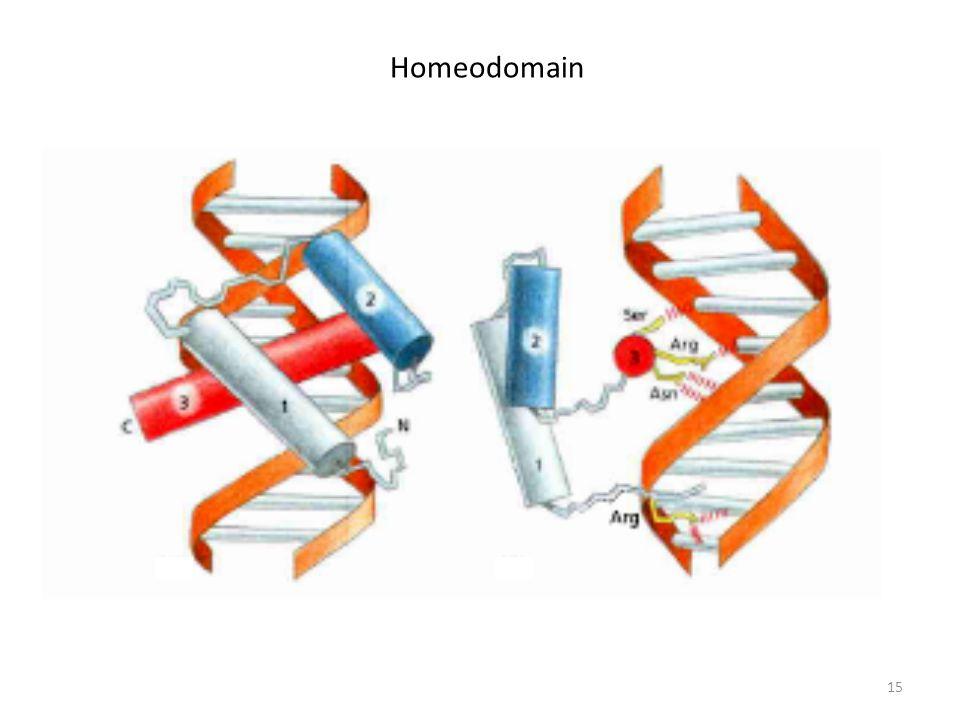 15 Homeodomain