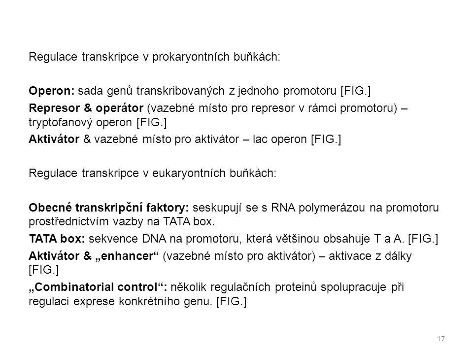 Regulace transkripce v prokaryontních buňkách: Operon: sada genů transkribovaných z jednoho promotoru [FIG.] Represor & operátor (vazebné místo pro re