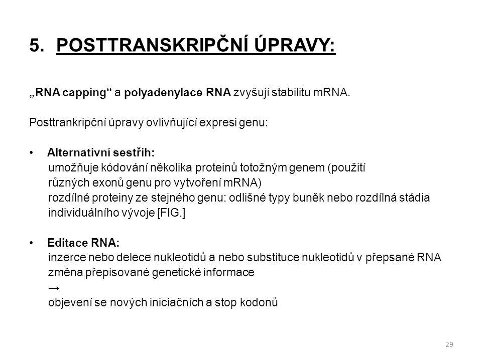 """5.POSTTRANSKRIPČNÍ ÚPRAVY: """"RNA capping"""" a polyadenylace RNA zvyšují stabilitu mRNA. Posttrankripční úpravy ovlivňující expresi genu: Alternativní ses"""