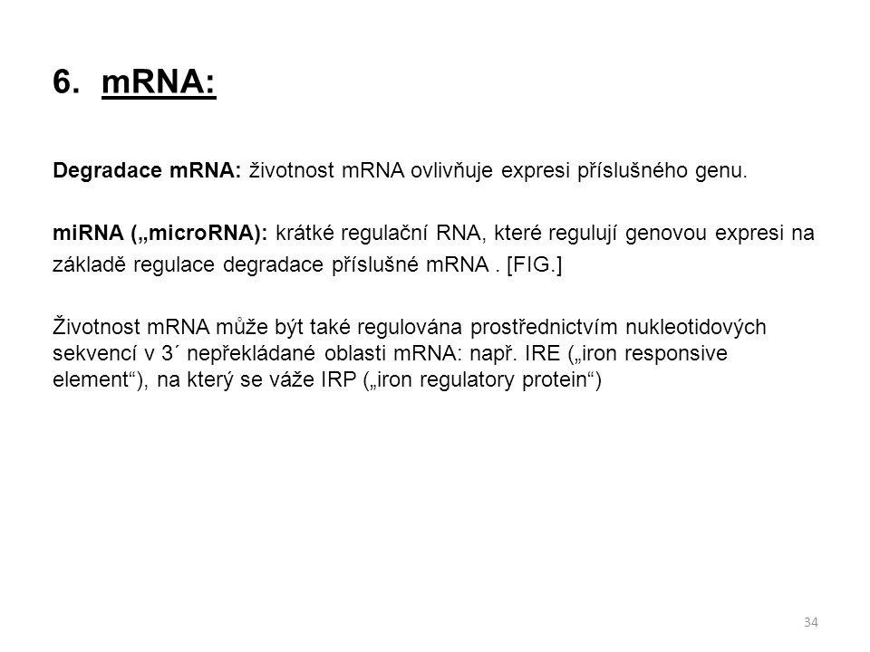 """6.mRNA: Degradace mRNA: životnost mRNA ovlivňuje expresi příslušného genu. miRNA (""""microRNA): krátké regulační RNA, které regulují genovou expresi na"""