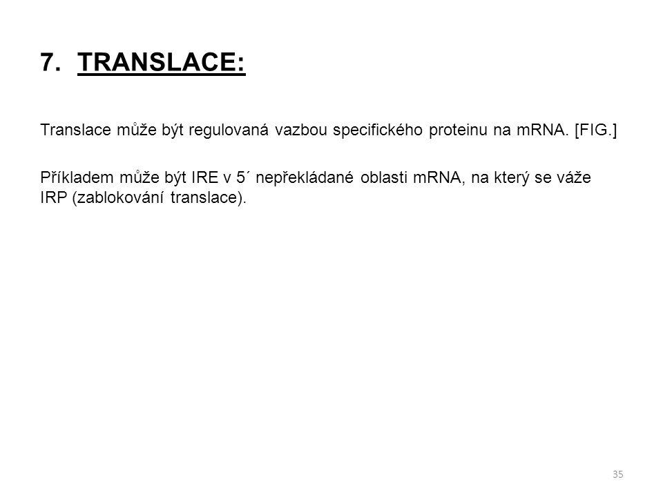 7.TRANSLACE: Translace může být regulovaná vazbou specifického proteinu na mRNA. [FIG.] Příkladem může být IRE v 5´ nepřekládané oblasti mRNA, na kter