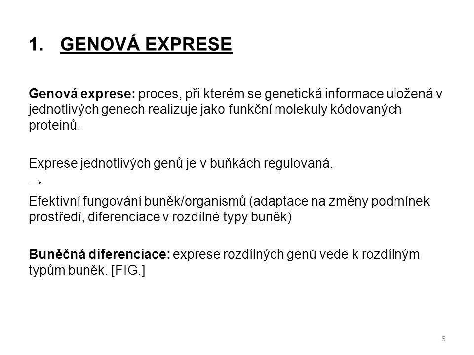 1. GENOVÁ EXPRESE Genová exprese: proces, při kterém se genetická informace uložená v jednotlivých genech realizuje jako funkční molekuly kódovaných p