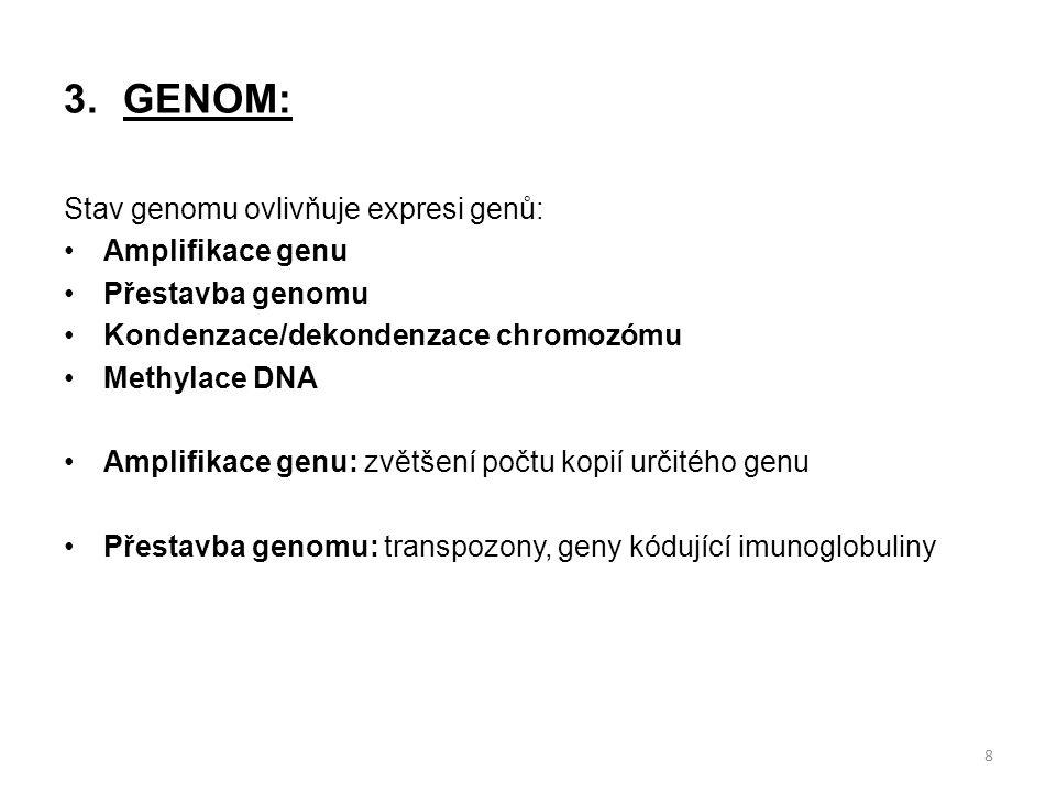3.GENOM: Stav genomu ovlivňuje expresi genů: Amplifikace genu Přestavba genomu Kondenzace/dekondenzace chromozómu Methylace DNA Amplifikace genu: zvětšení počtu kopií určitého genu Přestavba genomu: transpozony, geny kódující imunoglobuliny 8