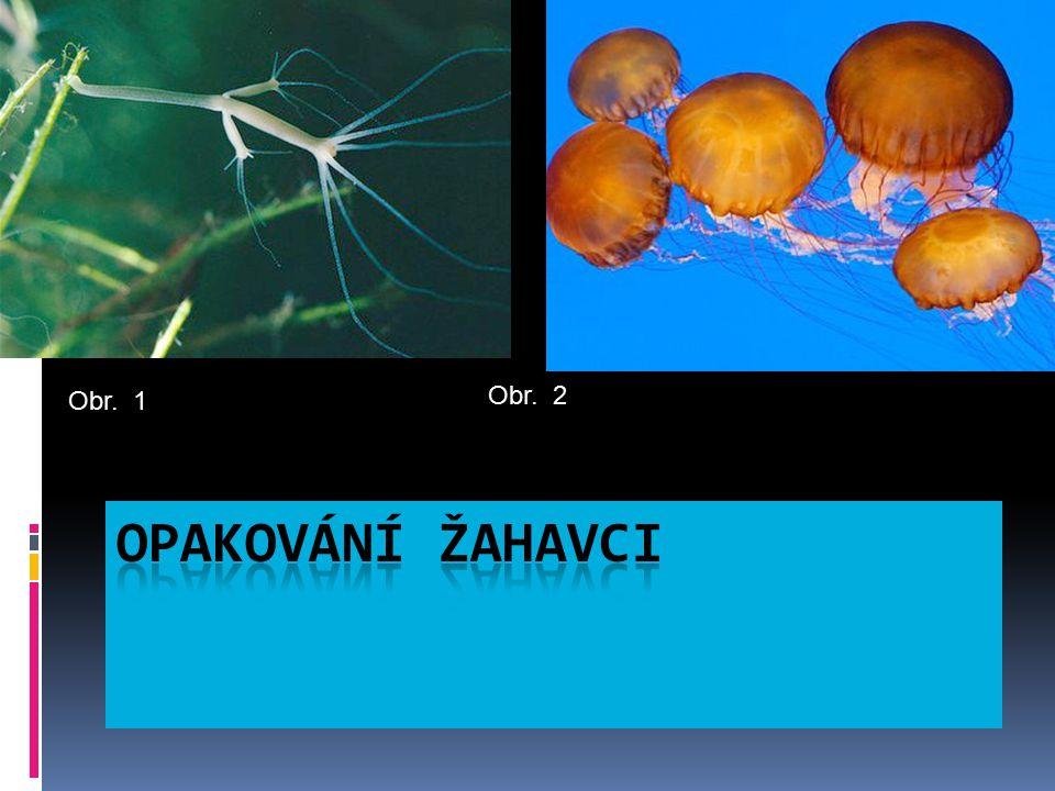 1.Koráli a, netvoří vápenaté kostry  2. Sasanky b, žijí přisedle v koloniích  3.