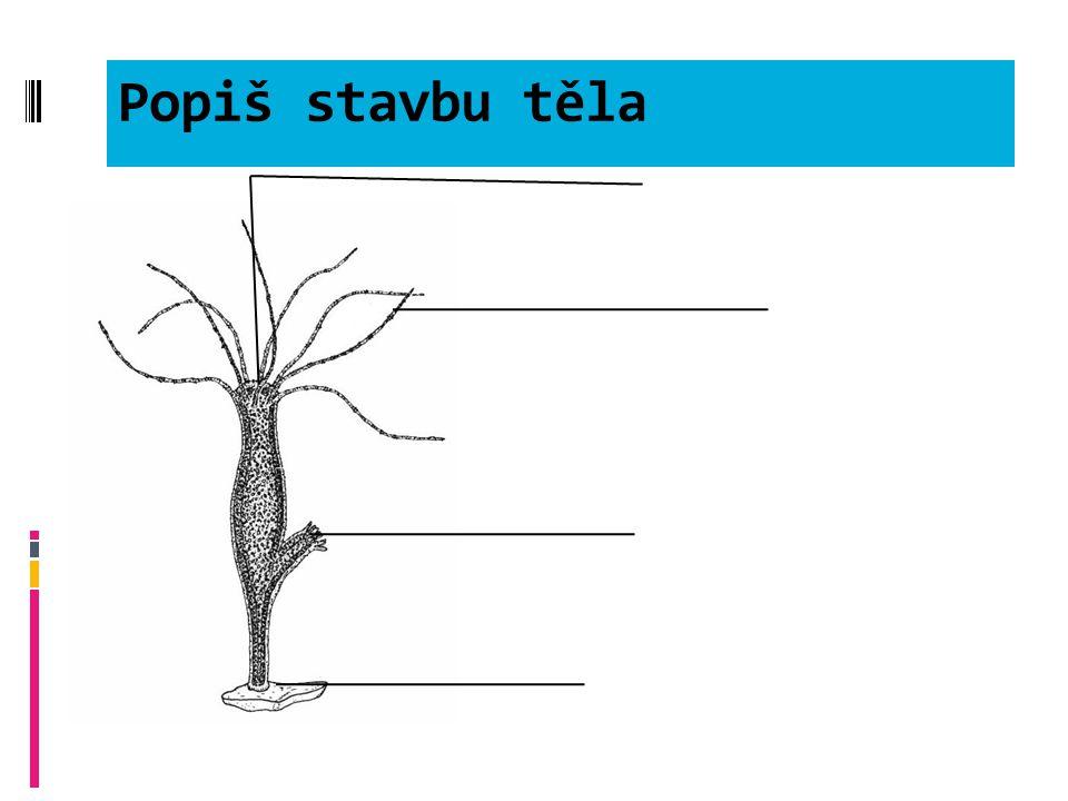 Použitá literatura  Čabradová et al: přírodopis pro 6.