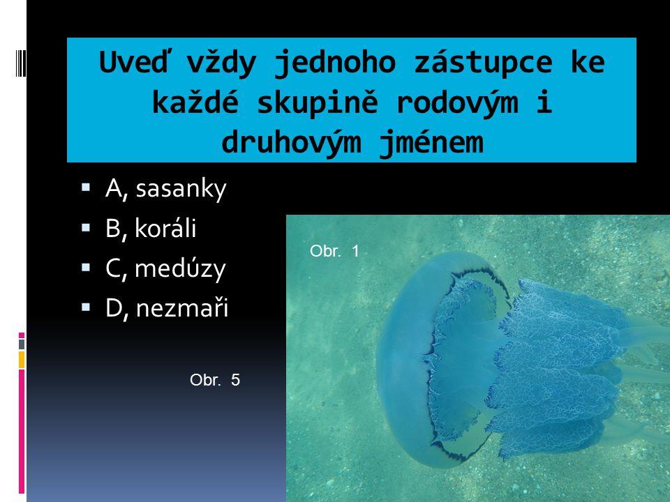 Uveď vždy jednoho zástupce ke každé skupině rodovým i druhovým jménem  A, sasanky  B, koráli  C, medúzy  D, nezmaři Obr. 1 Obr. 5