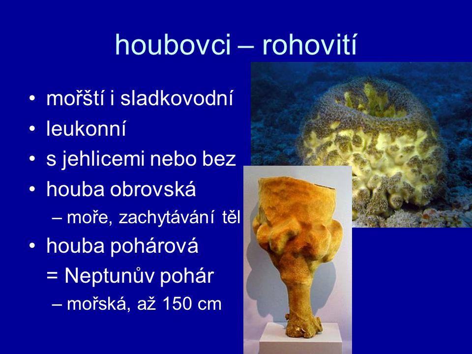 houbovci – rohovití mořští i sladkovodní leukonní s jehlicemi nebo bez houba obrovská –moře, zachytávání těl houba pohárová = Neptunův pohár –mořská,