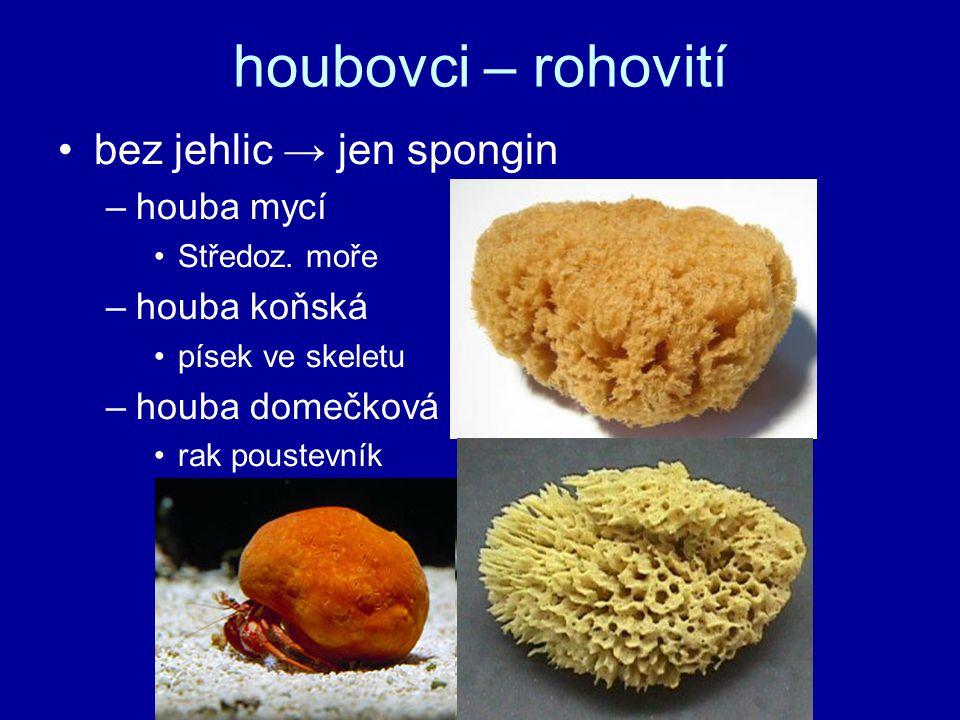 houbovci – rohovití bez jehlic → jen spongin –houba mycí Středoz. moře –houba koňská písek ve skeletu –houba domečková rak poustevník