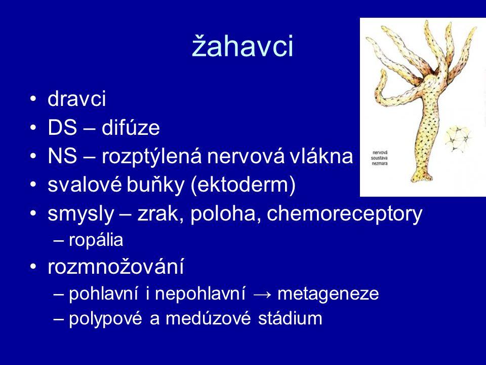 žahavci dravci DS – difúze NS – rozptýlená nervová vlákna svalové buňky (ektoderm) smysly – zrak, poloha, chemoreceptory –ropália rozmnožování –pohlav