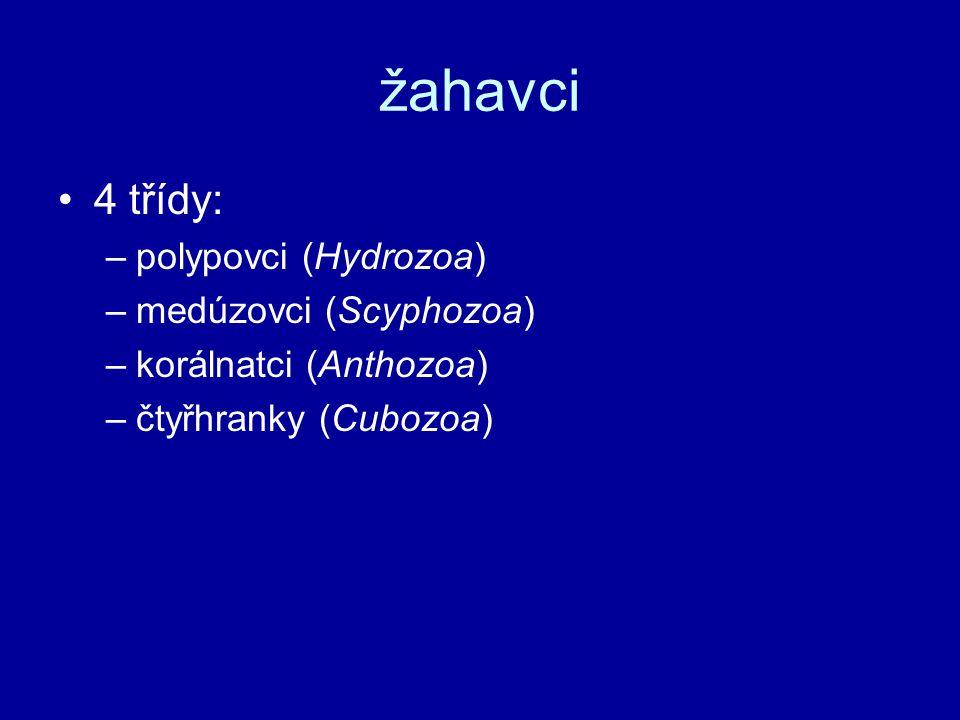 žahavci 4 třídy: –polypovci (Hydrozoa) –medúzovci (Scyphozoa) –korálnatci (Anthozoa) –čtyřhranky (Cubozoa)