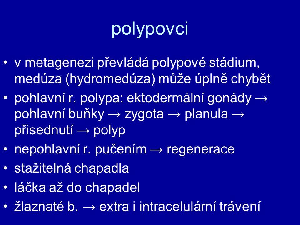 polypovci v metagenezi převládá polypové stádium, medúza (hydromedúza) může úplně chybět pohlavní r. polypa: ektodermální gonády → pohlavní buňky → zy