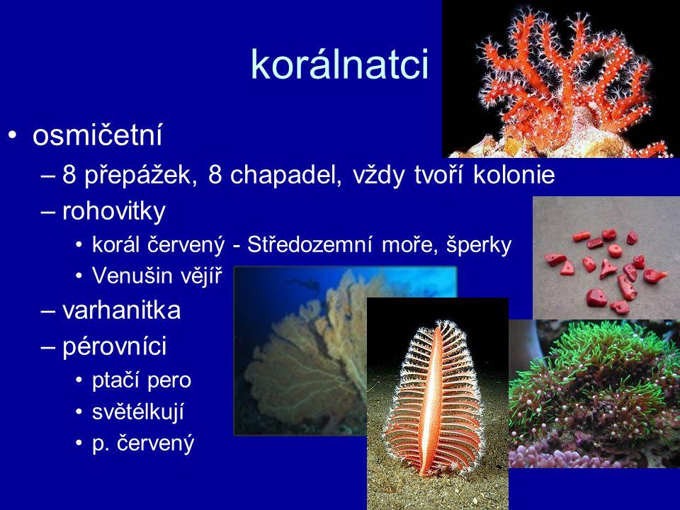 osmičetní –8 přepážek, 8 chapadel, vždy tvoří kolonie –rohovitky korál červený - Středozemní moře, šperky Venušin vějíř –varhanitka –pérovníci ptačí p