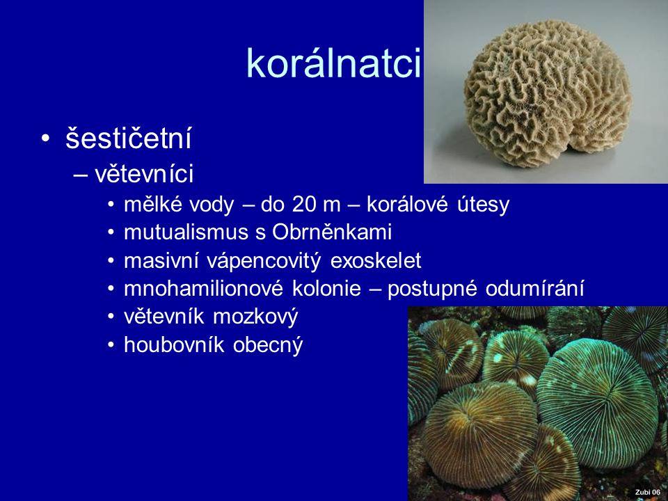 šestičetní –větevníci mělké vody – do 20 m – korálové útesy mutualismus s Obrněnkami masivní vápencovitý exoskelet mnohamilionové kolonie – postupné o