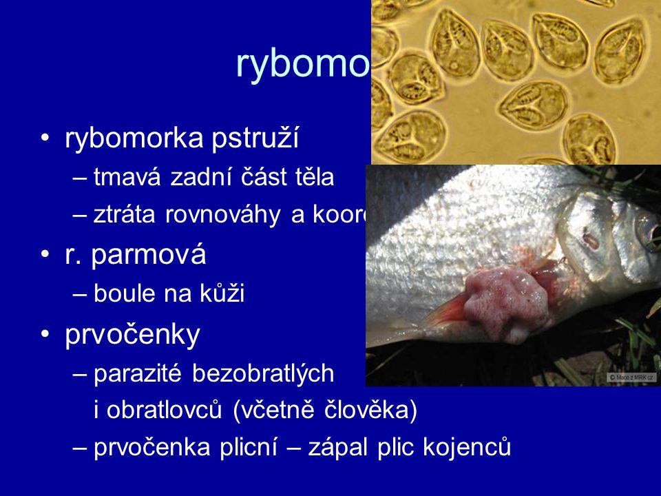 rybomorky rybomorka pstruží –tmavá zadní část těla –ztráta rovnováhy a koordinace → smrt hladem r. parmová –boule na kůži prvočenky –parazité bezobrat