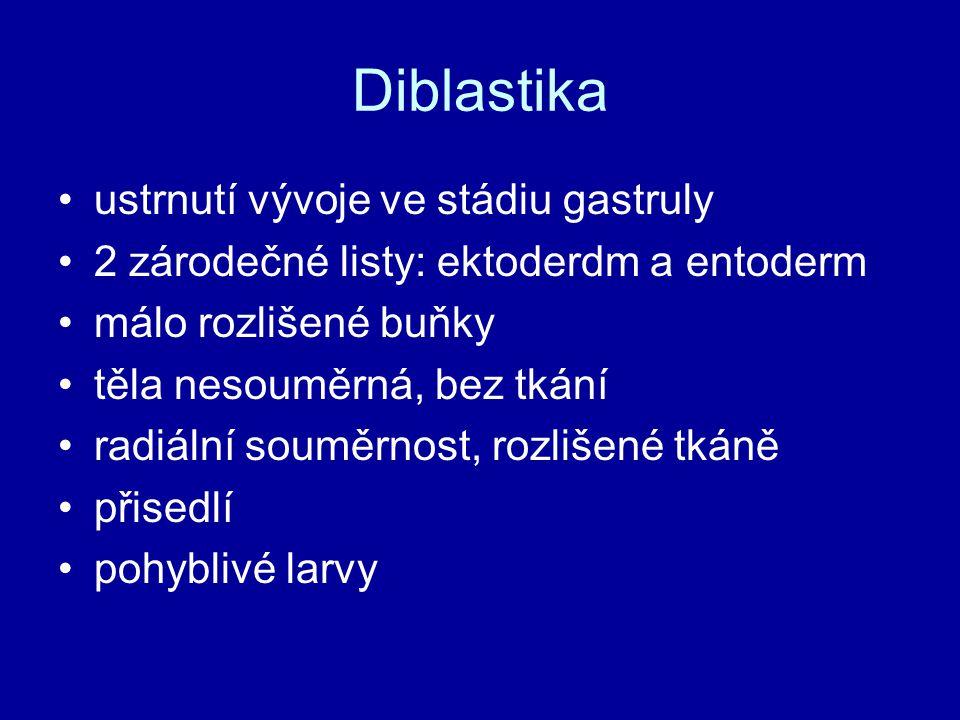 Diblastika ustrnutí vývoje ve stádiu gastruly 2 zárodečné listy: ektoderdm a entoderm málo rozlišené buňky těla nesouměrná, bez tkání radiální souměrn