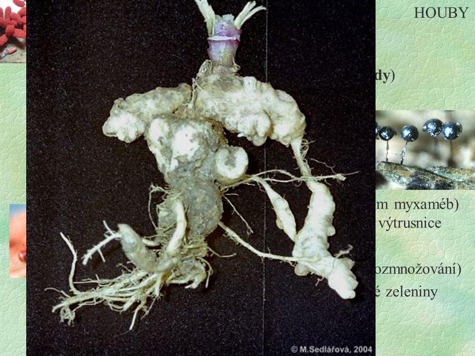 Hlenky §jednobuněčné - pohyb pomocí - bičíků (myxomonády) - panožek (myxaméby) §pohyblivé výtrusy §netvoří podhoubí §parazité nebo saprofyté §rozmnožování - nepohlavně - dělení - pohlavně - vznik plasmodií (sléváním myxaméb) - na plasmodiích vyrůstají výtrusnice (sporokarpy) - vznik spor (nepohlavní rozmnožování) §zástupci : Nádorovka kapustová - parazit košťálové zeleniny : Pýchavička vlčí mléko - na pařezech HOUBY