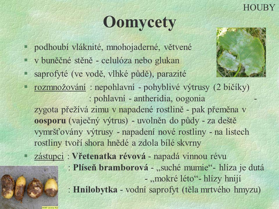 Oomycety §podhoubí vláknité, mnohojaderné, větvené §v buněčné stěně - celulóza nebo glukan §saprofyté (ve vodě, vlhké půdě), parazité §rozmnožování :