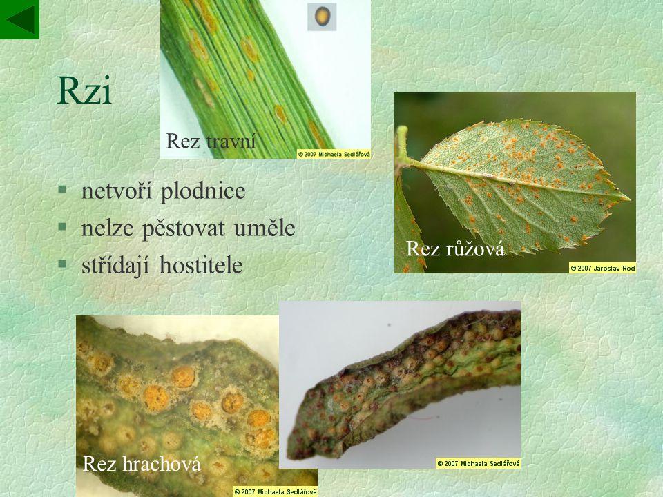 Rzi §netvoří plodnice §nelze pěstovat uměle §střídají hostitele Rez travní Rez růžová Rez hrachová