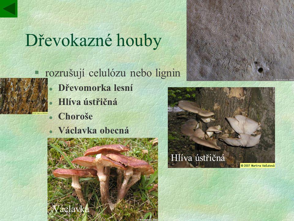 Dřevokazné houby §rozrušují celulózu nebo lignin l Dřevomorka lesní l Hlíva ústřičná l Choroše l Václavka obecná Choroš Hlíva ústřičná Václavka