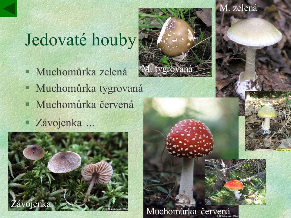 Jedovaté houby §Muchomůrka zelená §Muchomůrka tygrovaná §Muchomůrka červená §Závojenka...