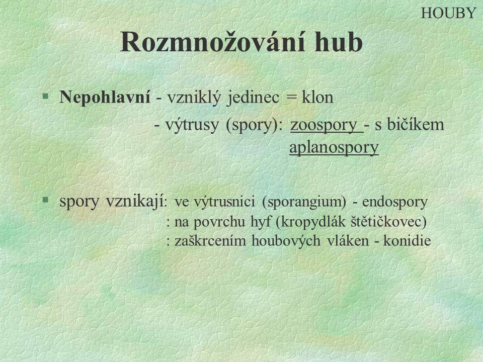 Rozmnožování hub §Nepohlavní - vzniklý jedinec = klon - výtrusy (spory): zoospory - s bičíkem aplanospory §spory vznikají : ve výtrusnici (sporangium) - endospory : na povrchu hyf (kropydlák štětičkovec) : zaškrcením houbových vláken - konidie HOUBY