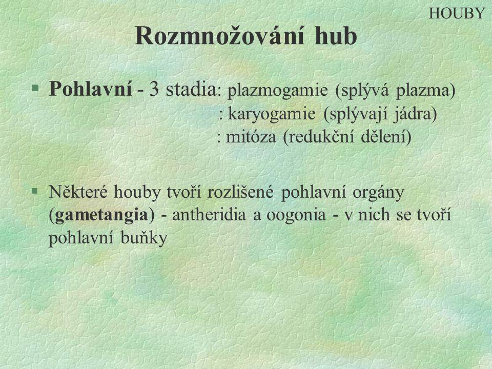 Rozmnožování hub §Pohlavní - 3 stadia : plazmogamie (splývá plazma) : karyogamie (splývají jádra) : mitóza (redukční dělení) §Některé houby tvoří rozl