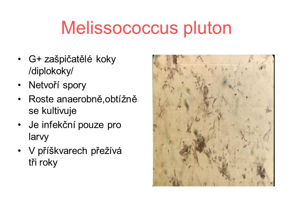 Melissococcus pluton G+ zašpičatělé koky /diplokoky/ Netvoří spory Roste anaerobně,obtížně se kultivuje Je infekční pouze pro larvy V příškvarech přežívá tři roky