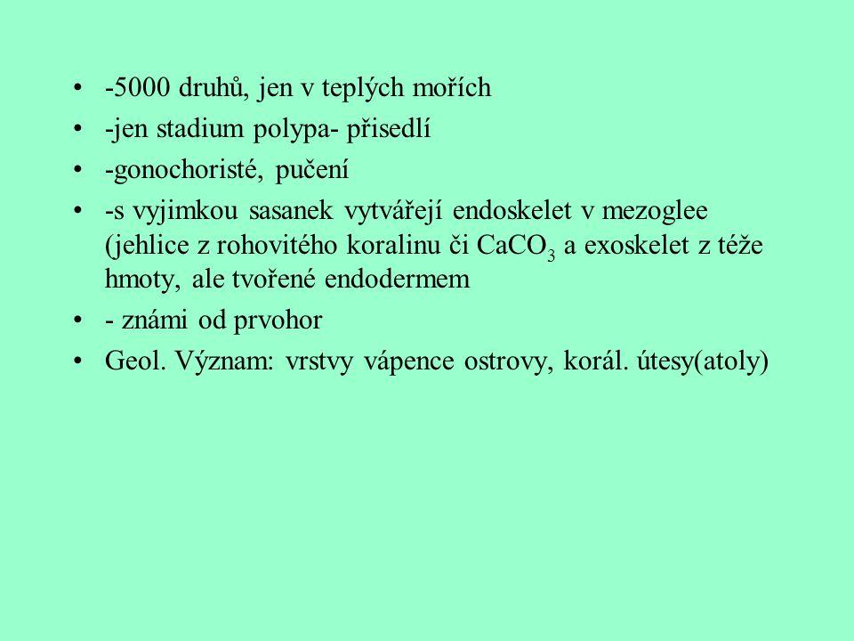 -5000 druhů, jen v teplých mořích -jen stadium polypa- přisedlí -gonochoristé, pučení -s vyjimkou sasanek vytvářejí endoskelet v mezoglee (jehlice z r