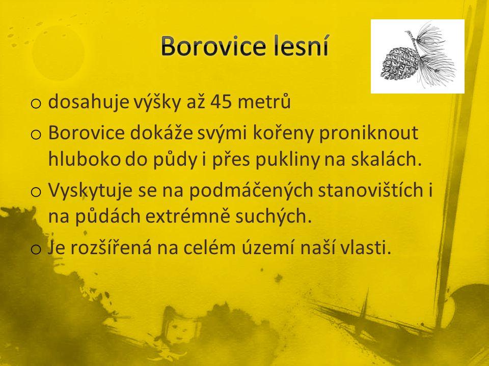 o dosahuje výšky až 45 metrů o Borovice dokáže svými kořeny proniknout hluboko do půdy i přes pukliny na skalách. o Vyskytuje se na podmáčených stanov